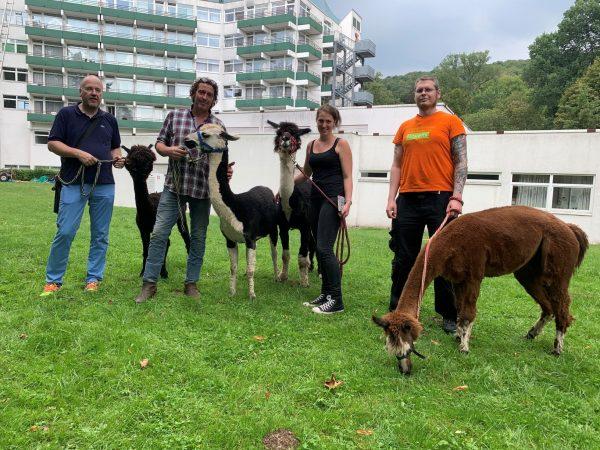 Therapie mit Alpakas in der Reha