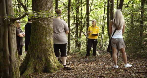 Die heilende Wirkung des Waldes